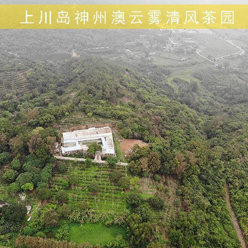 上川岛神州澳云雾清风茶园-上川岛白云茶VR全景地图